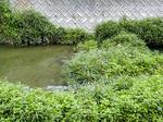 seseragi_river.jpg